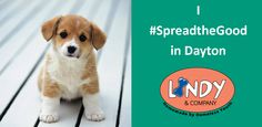 Daybreak Dayton created Lindy & Company so pet owners can buy healthy, delicious treats that are homemade by homeless youth. Working at Lindy's gives these kids an opportunity to develop the skills they need to get and keep good jobs! #SpreadtheGood