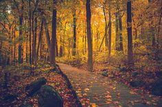 General 2000x1333 Sourland Mountain New Jersey fall trees walkway nature forest