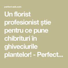 Un florist profesionist știe pentru ce pune chibrituri în ghiveciurile plantelor! - Perfect Ask Salvia, Wisteria, Backyard, Shake, Gardening, Craft, Decor, Gardens, Diet