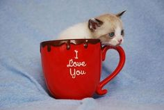 3. Tears in his eyes. 25 Adorable kittens in cups