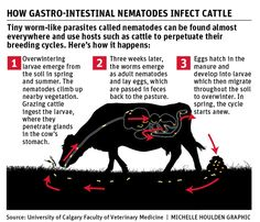 Parasite control key to making cattle profitable - The Western Producer