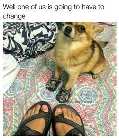 Funny Dogs Memes 37 Of The Best Funny Animal Pictures Ever Cute Animal Memes, Funny Animal Pictures, Funny Animals, Cute Animals, Dog Pictures, Animal Funnies, Funny Dog Memes, Funny Dogs, Cute Dogs