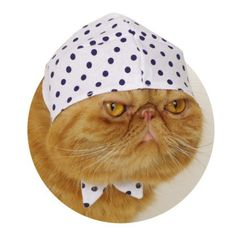 What the SMART Cat will be wearing this fall.