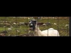 Taylor Swift - I knew you were a goat when you walked in (NEW)