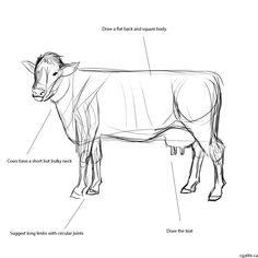 How to draw a cow step 1: draw a rectangle to where you will attach the head and the limbs to. The limbs are very straight forward as well. The main thing to look out for is to make it fairly vertical. You want to emphasize the tall figure of the cow. Do not forget about the joints of the limbs. You can suggest these by circular shapes.