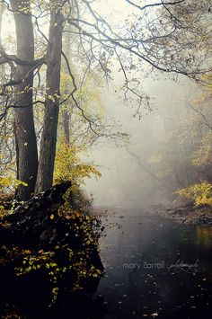 season of mists (New Jersey) by carroll.mary (so behind I'll never catch up) on Flickr