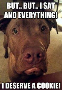 Every dog deserves a treat! #PETstock