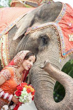 Indian bride with elephant Elephant India, Asian Elephant, Elephant Love, Elephants Never Forget, Save The Elephants, Baby Elephants, Beautiful World, Animals Beautiful, Beautiful People