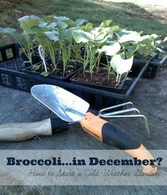 How to grow a cold weather garden