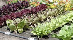 Babičkine zlepšováky do záhrady: Tieto geniálne triky vám ušetria kopu práce, ale to zďaleka nie je všetko | Casprezeny.sk
