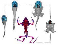 Image result for metamorphic transformation