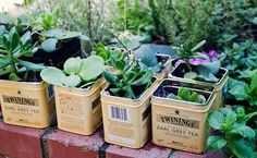 Convert old tea tins into planters. Would be so cute for herbs in the kitchen. Recycled Planters, Herb Planters, Planter Ideas, Plant Pots, Small Succulents, Succulents Garden, Growing Succulents, Succulent Arrangements, Succulent Pots