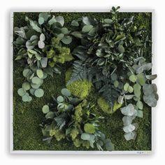 styleGREEN! Verticale tuinen voor aan je muur. Voor het eerst een betaalbare en duurzame oplossing. styleGREEN! 100% natuurlijk, 0% onderhoud, altijd groen. Deze fraaie Plant islands bestaan uit diverse soorten moss en planten.