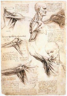 étude du bras