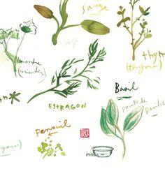 Herbs (detail) by Lucile Prache