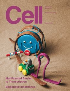 Great cover of Cell. DNA wrapped around a histone, made in modeling clay.