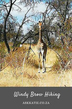 Hiking in Gauteng Johannesburg day trips Local travel Johannesburg hiking Day Trips, Moose Art, Hiking, Travel, Animals, Walks, Animales, Viajes, Animaux