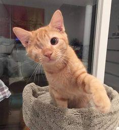 Cute Kittens & Cats - Orange Cat - Ideas of Orange Cat - Cute Kittens & Cats The post Cute Kittens & Cats appeared first on Cat Gig. Pretty Animals, Cute Little Animals, Pretty Cats, Cute Funny Animals, Beautiful Cats, Animals Beautiful, Cute Kittens, Cats And Kittens, Kittens Cutest Baby