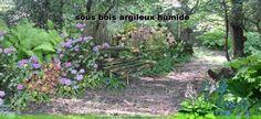 jardin de sous-bois: planter sous un arbre