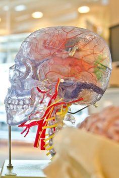 Brain Health: 5 Foods to Avoid to Keep Your Healthy Brain Intact - Clean_Clean Living_Clean Eating School Loans, Student Loans, Healthy Brain, Brain Health, Mental Health, Healthy Food, Head Transplant, Houston, Natural Air Freshener