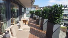 Indoor, Patio, Outdoor Decor, Shopping, Home Decor, Gardens, Balconies, Plants, Home