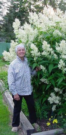Now that the beautybush has faded pride of place goes to the persicaria polymorpha flowers from late june to september mightylinksfo