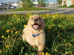 soyapug:  dog mood board