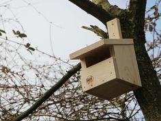 Halbhöhle, Nistkasten Bird, Outdoor Decor, Home Decor, Kinds Of Birds, Projects For Kids, House, Decoration Home, Room Decor, Birds