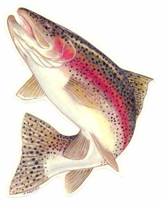 Fish Allover Variety Realistic Sea Fishing Trout Cotton Fabric BTHY