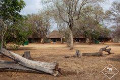 Où dormir dans le parc national Kruger ? - My Wildlife Parc National Kruger, Safari, Wildlife, Plants, Plant, Planets