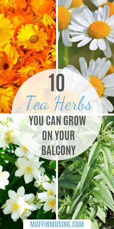 Best Herbal Tea Plants for Indoor Gardening - Muffin Musing : How to grow your own herbal tea mixes! Includes herbs that you can grow on your balcony, indoors, or in small spaces. It makes for a great diy project! Balcony Plants, Outdoor Plants, Balcony Garden, Garden Plants, Plants Indoor, Indoor Herbs, Green Garden, Vegetable Garden, Best Herbal Tea