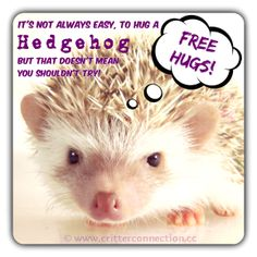 #hedgehogs #hedgies #hugs #cute #millermeade #adorable #funny #meme www.critterconnection.cc