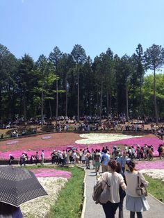 秩父 シバザクラ 2012.5.5
