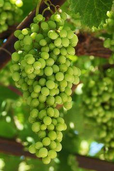 ...Green Grapes