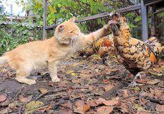 Hobby Farms: Growing Food & Families – Społeczność – Google+