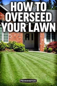The secret to a thick full lawn is overseeding. #lawncareseeding