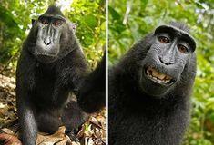Lorsqu'un animal se met en tête de prendre un petit selfie, vous vous en douterez, c'est autrement plus drôle que quand c'est votre petite soeur.