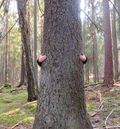 Viäl piänempiäki puita o paljo