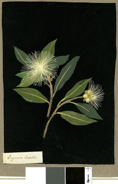 nickyskye meanderings: Mary Delany, collage artist of flowers in the 1700's