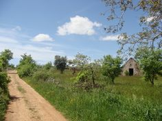 """very old """"lamione"""" in countryside - Toritto (BA) Italy"""