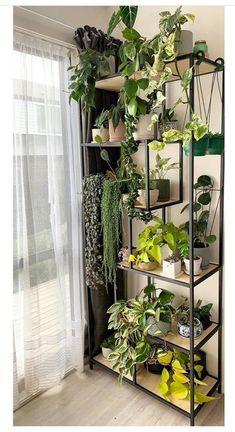 Room With Plants, House Plants Decor, Plant Decor, Plant Aesthetic, Aesthetic Room Decor, Plantas Indoor, Bedroom Plants, Plant Shelves, Room Ideas Bedroom