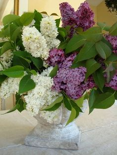 Would be wonderful to have these two lilac types in ones yard