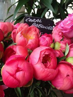 Love the bright coral huge on these peonies #wedding #flowers