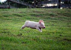 2010_07-27_FSNY_Kim_Gordon_piglet_002_CREDIT_Farm_Sanctuary