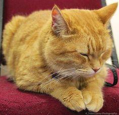 "A Very Sleepy James Bowen's ""Bob the Cat"" | Flickr - Photo Sharing!"