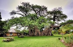 Bar na árvore