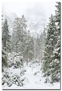 Christmas in Yosemite - If only we had experienced this when we lived only a couple hours from there.