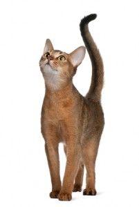 How to interpret feline body language