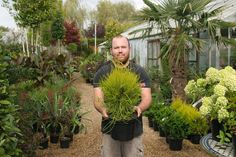 Buy Platycladus 'Franky Boy' from Big Plant Nursery Big Plants, Foliage Plants, Plant Nursery, Compost, Branches, Shrubs, 10 Years, Turning, Looks Great