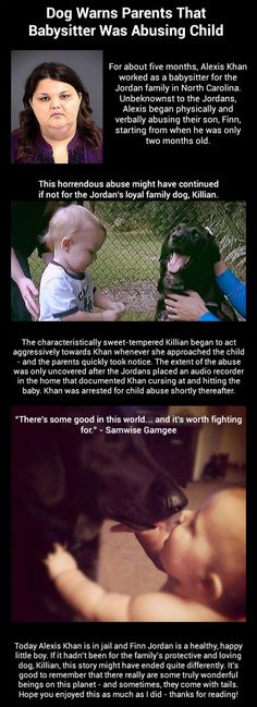 Just one more reason to add a four footed member to the family >Dog warns parents babysitter was abusing child...